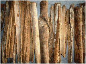 Kayu Raru, Tumbuhan Herbal Obat Diabetes dan Campuran Tuak