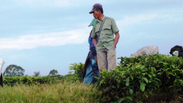 Kami bertanya pada seorang mandor kebun teh agar tidak kesasar ditengah perkebunan.