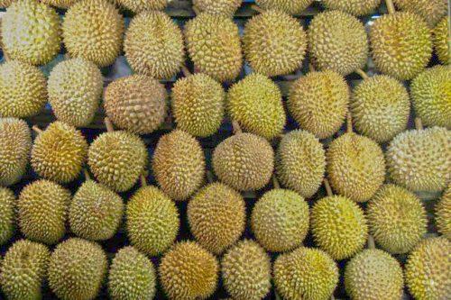 Tempat Makan Durian di Medan Yang Buka 24 Jam