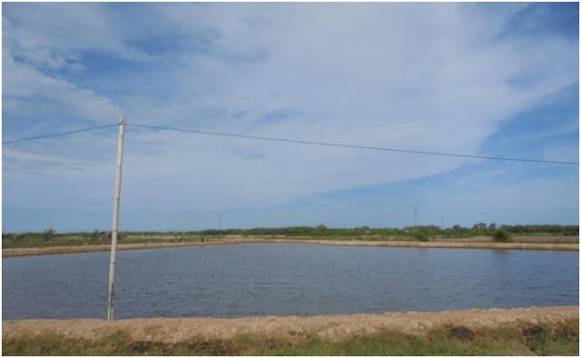 Sebuah tambak ikan dekat dengan Danau Siombak