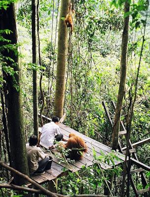 Wisata Alam di Bukit Lawang, Bahorok Sumatera Utara